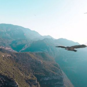 Special flight with a huge vulture!!